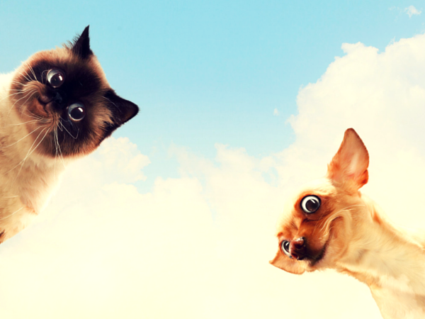 Don't hire a copycat of yourself